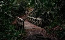 jungle-4822003_1920